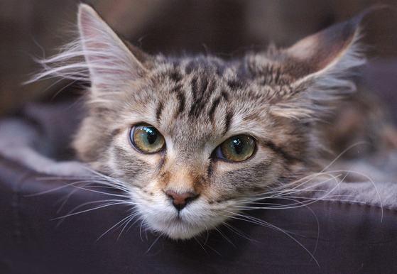 zdjęcia ogolonych kotów